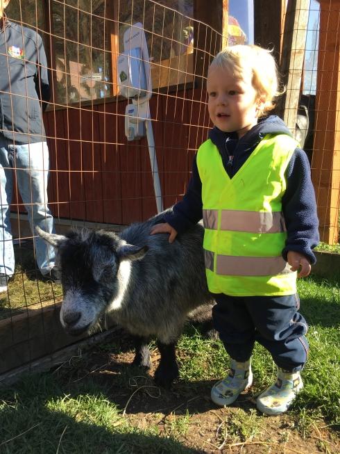 I like goats