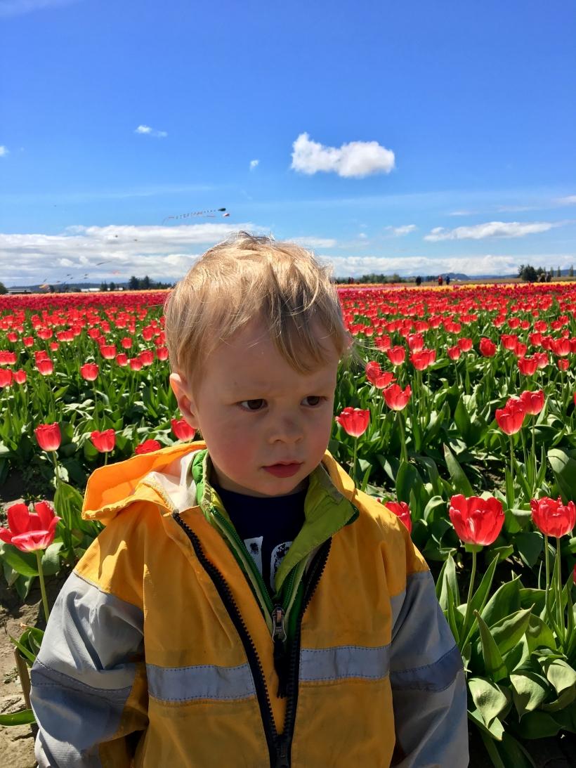 Grrrrrr Tulips