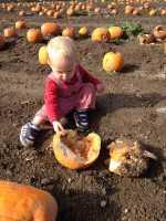 Mushy Pumpkin